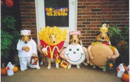 trick_or_treat_dogs